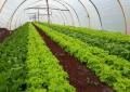 Cresol amplia oferta de crédito rural a associados