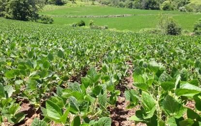 Espaçamento reduzido na soja pode potencializar os rendimentos da lavoura