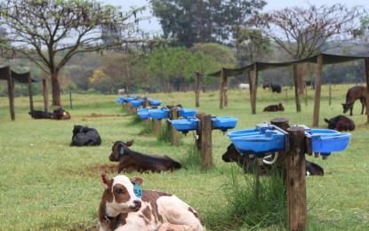 Incidência de diarreia em Terneiras aumenta em períodos de chuva e calor