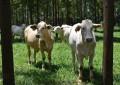 Brasil antecipa meta de reduzir emissão de CO2 com a agropecuária sustentável