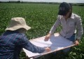 Manejo Integrado de Pragas proporciona economizar na produção de soja