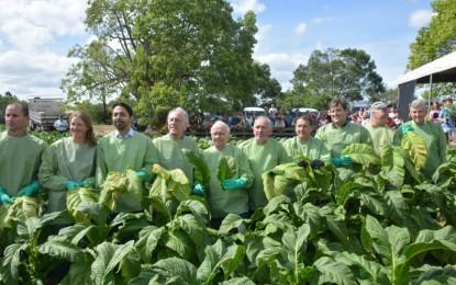 Aberta oficialmente a colheita do tabaco