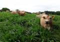 Preço do leite deve subir no curto prazo, diz Cepea