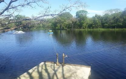 Criação de tilápia na bacia do Rio Uruguai é liberada após 15 anos de proibição