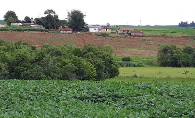 Política agrícola deve dar maior destaque ao seguro rural