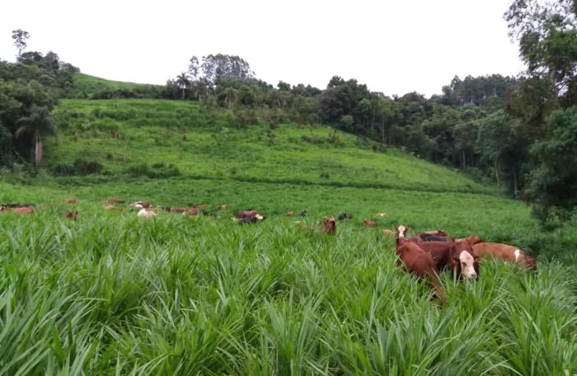 Brasil vai ficar com quase metade da cota para carne bovina