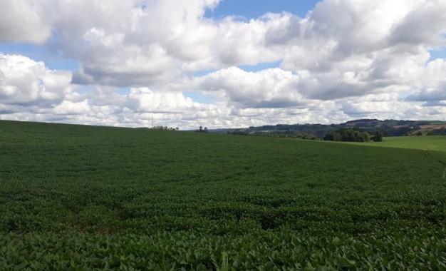 Técnicos agrícolas podem ser prestadores de assistência técnica e extensão rural