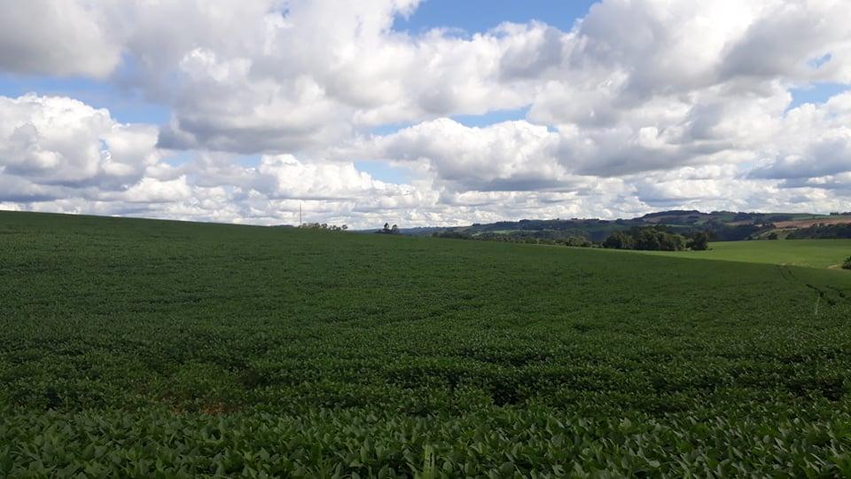 Produtores de soja da região realizam tratamento das lavouras de soja.