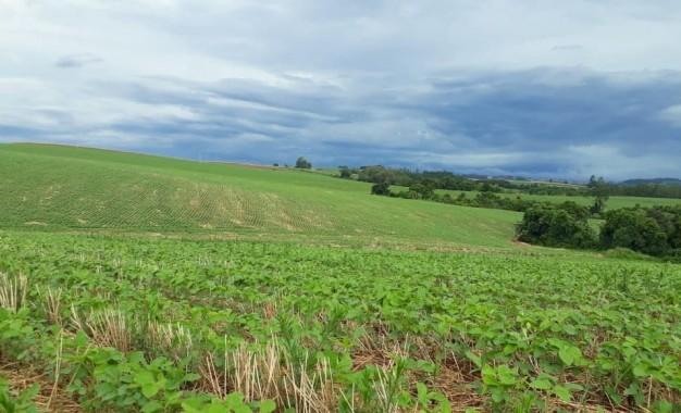 Nutrição do solo: A Base Forte da Agricultura do Futuro