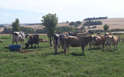 O RS é o 2º maior produtor de leite do Brasil