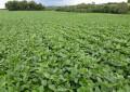 Demanda chinesa deve mexer com mercado da soja; confira tendências para a semana