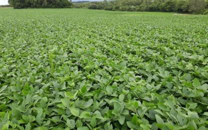 Cultura da soja ganha primeiro produto biológico registrado para combate à ferrugem asiática da soja