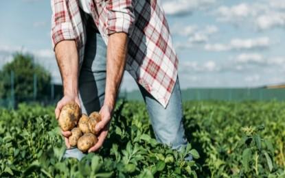 Brasil pode contar com novo fundo para financiar produção agrícola