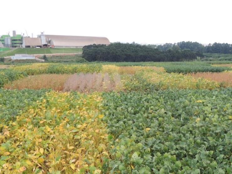 Entra em vigor novo sistema de Registro de Cultivares