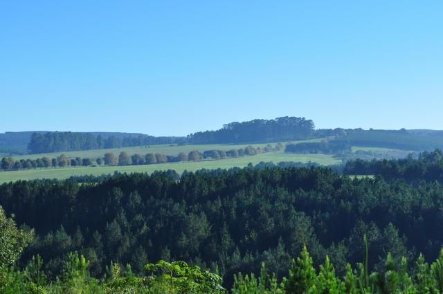Aumentar em 20% a área de florestas plantadas é objetivo do Mapa