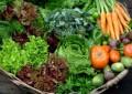 Brasil tem cerca de 17 mil produtores de orgânicos