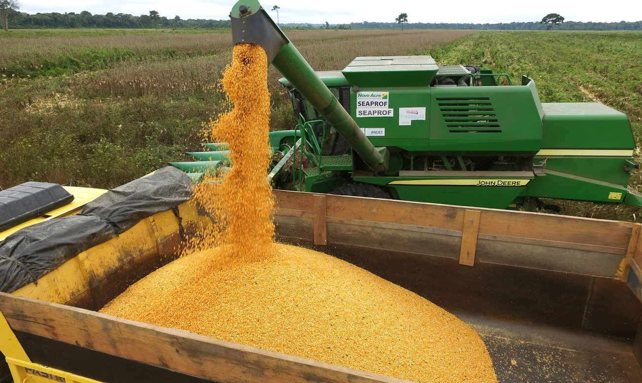 Demanda global por milho deverá registrar alta de 25% até 2026