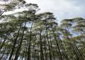 Ministério da Agricultura aprova Plano Nacional de Florestas Plantadas