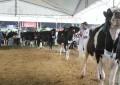 Mais de mil animais marcam presença na Expointer Digital 2020