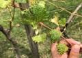 RS estabelece regras para aplicação de agrotóxicos para evitar deriva
