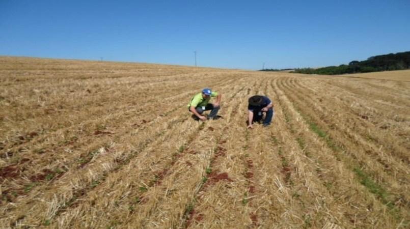 Embrapa anuncia aplicativo para o produtor fazer a classificação do solo