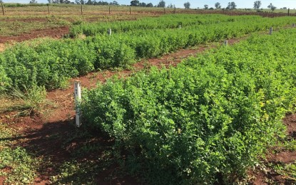 Fertilizante natural e liberado para orgânicos na UE amplia produção em 20%