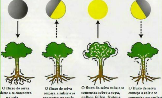 Conheça a influência da lua na agricultura