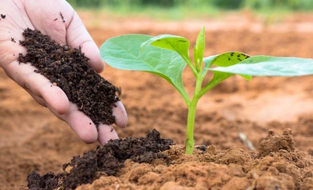 Fundos de investimento podem aumentar produção e sustentabilidade do agro