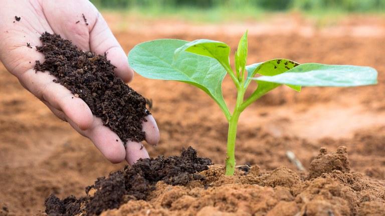 Plano Nacional de Fertilizantes Será Elaborado