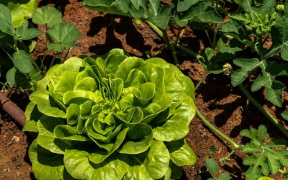Normas para produção integrada de folhosas entram em vigor em fevereiro