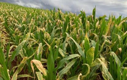 RS prorroga prazo para que municípios se adaptem às regras dos herbicidas hormonais