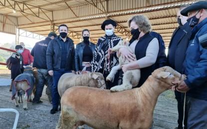 Primeiros animais chegam à Expointer 2021